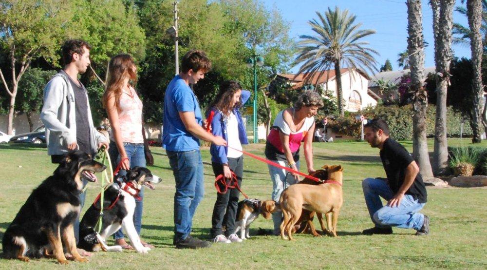 ניר שדה אילוף כלבים אילוף קבוצתי