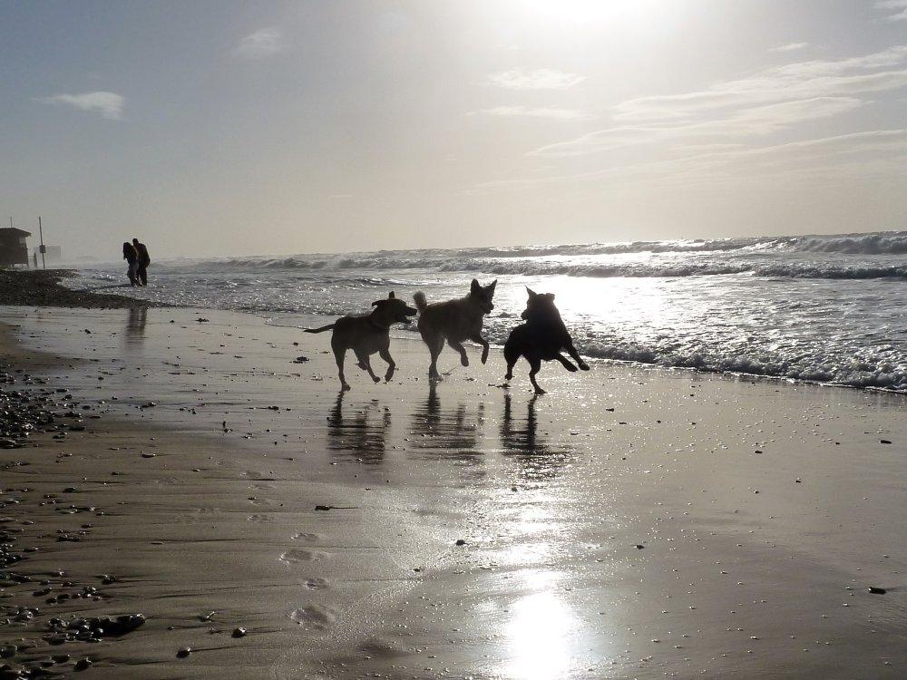 ניר שדה מאלף כלבים