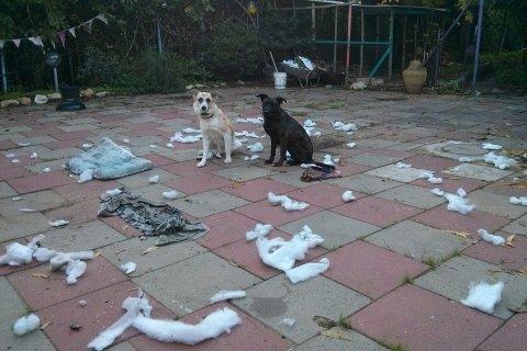 אילוף כלבים פתרון לבעיות התנהגות