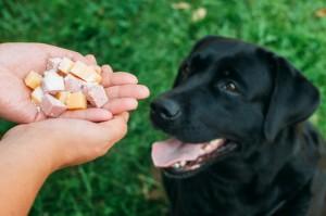 אוכל מורעל לכלבים