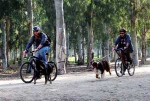 רכבות כלבים פארק הירקון