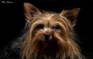 צילום כלבים גבעתיים
