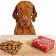 מזון יבש או מזון נא