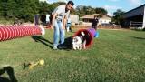 ספורט לכלבים