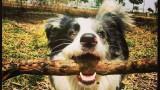 אילוף כלבים תל אביב