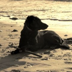 טיפים לקיץ לבריאות הכלב