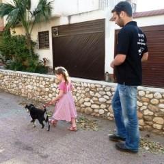 אילוף כלבים בתל אביב