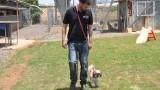 מאלף כלבים תל אביב