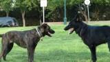 אילוף כלבים תקשורת כלבית