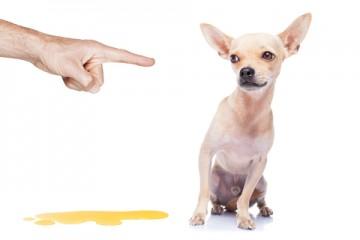 הכלב עושה צרכים בבית?