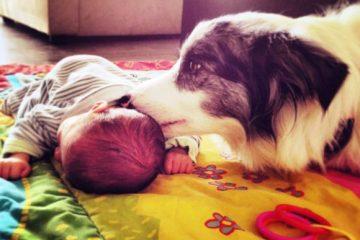 הכנסת תינוק חדש לבית